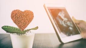 L'amour élève le concept de grossesse de fleur Photos libres de droits