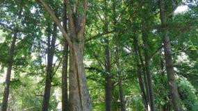 L'amour d'arbre et sont embrassés Photographie stock