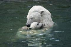 L'amour de mère. Ours blanc avec l'petit animal Photo libre de droits