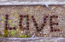 L'amour de mot du vieux bouleau s'embranche dans un cadre Photo stock