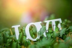 L'amour de mot en bois blanc sur un buisson vert Photos stock