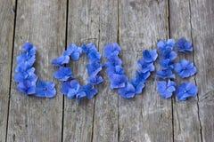L'amour de mot est écrit avec les pétales bleus de hortensia Photographie stock
