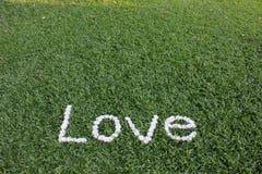 L'amour de mot fait à partir des fleurs de marguerite Image stock