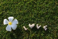 L'amour de mot sur l'herbe verte Image stock