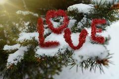 L'amour de mot sur une branche neigeuse de sapin bleu Images libres de droits