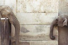 L'amour des éléphants Image stock