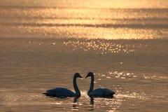 L'amour du coucher du soleil Photographie stock libre de droits