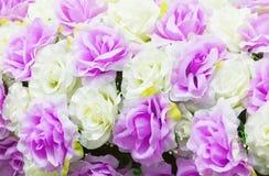 L'amour en plastique et la beauté blancs de fleur de Rose et pourpres de fond de concept avec l'espace de copie ajoutent le texte Photographie stock libre de droits