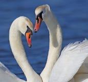 L'amour est… marqueur de rose sur le fond blanc Photo stock