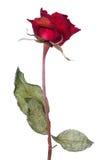 L'amour est mort Image stock