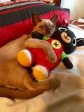 L'amour est un chaton de sommeil que le chat étreignant le nounours concernent le lit Images stock