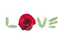 L'amour est une rose Images libres de droits