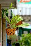 L'amour fleurit l'orchidée seule dans le ciel Photos libres de droits