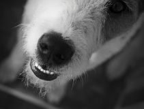 L'amour pour des chiens Image libre de droits