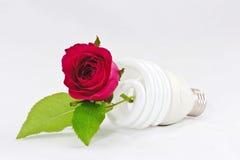 L'ampoule et s'est levée Photo stock