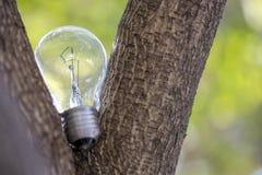 L'ampoule simple sur l'arbre Image stock