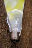 L'ampoule simple sur l'arbre Photographie stock libre de droits