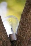 L'ampoule simple sur l'arbre Photo libre de droits