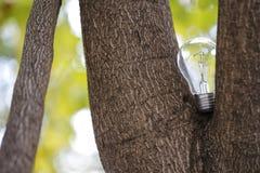 L'ampoule simple sur l'arbre Photos libres de droits