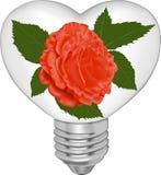 L'ampoule sous forme de coeur et dans elle un rouge s'est levée Image stock