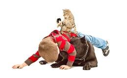 L'amusement de garçon, de chien et de chat jouant ensemble Images libres de droits