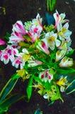 L'anémone japonaise ou l'anémone ou le thimbleweed chinois, ou le hupehensis d'anémone de windflower est les usines fleurissantes image libre de droits