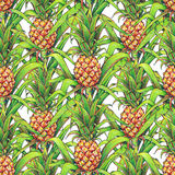 L'ananas avec le vert laisse l'élevage de fruit tropical dans une ferme Modèle sans couture de marqueurs de dessin d'ananas sur u Photo libre de droits