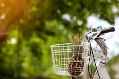 L'ananas dans le panier de vélo sur le vert a brouillé le bokeh de fond doux Images stock