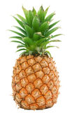 L'ananas a isolé Photos libres de droits