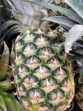 L'ananas la fin entière, verdissent avec les feuilles, un fond sur le marché sain illustration de vecteur