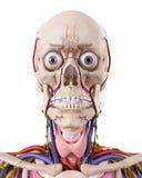 L'anatomia capa immagine stock libera da diritti
