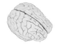 L'anatomie de cerveau illustration stock