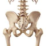 L'anca illustrazione di stock