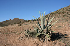 L'Andalusia Immagine Stock Libera da Diritti