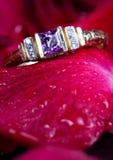 L'anello ed il colore rosso di oro sono aumentato. fotografie stock libere da diritti