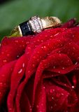 L'anello ed il colore rosso di oro sono aumentato. Fotografia Stock Libera da Diritti