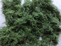 L'aneth frais a sélectionné du jardin et a séché dans une ferme organique photos libres de droits