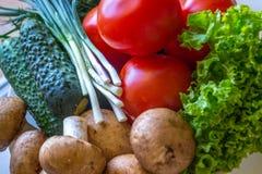 L'aneto dei pomodori si espande rapidamente e pomodori e foglie del salat Fotografia Stock Libera da Diritti