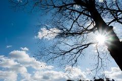 L'angle de soulèvement la branche hors du backgro de feuillage et de rayon de soleil Image stock