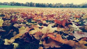 L'Angleterre Donny, parc de champ de ville Image libre de droits
