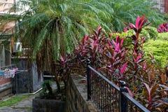 L'angolo dell'isola-Kulangsu Immagini Stock