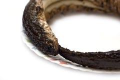 L'anguilla ha fumato Fotografie Stock Libere da Diritti