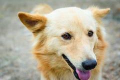 L'animal appelle le chien Chien jouant des sourires extérieurs Photographie stock
