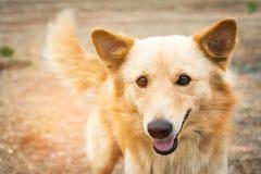 L'animal appelle le chien Chien jouant des sourires extérieurs Photos stock