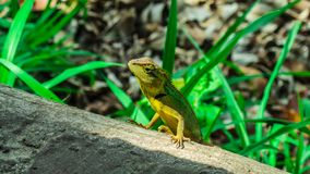 L'animal d'environnement photographie stock