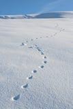 L'animal suit l'hiver de neige Image libre de droits