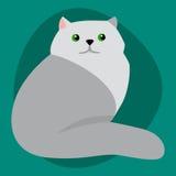 L'animale adorabile grigio lanuginoso del fumetto del ritratto sveglio siberiano dell'animale domestico della razza del gatto ed  illustrazione di stock