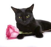 L'animale domestico sveglio nero (gatto) con è aumentato su fondo bianco fotografia stock