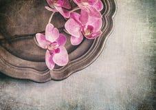 L'annata ha disegnato la natura morta con le orchidee Fotografia Stock Libera da Diritti