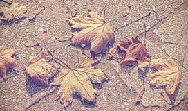 L'annata ha tonificato il fondo delle foglie di autunno Fotografia Stock Libera da Diritti